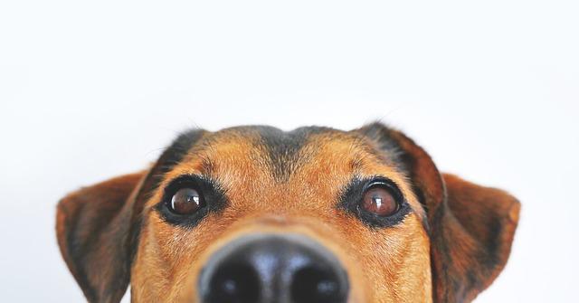 perro, aliado salud