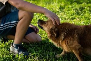 salud perro compañía amor saludable